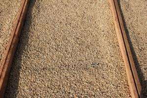 Quy trình kiểm soát chất lượng cà phê FARMER Coffee